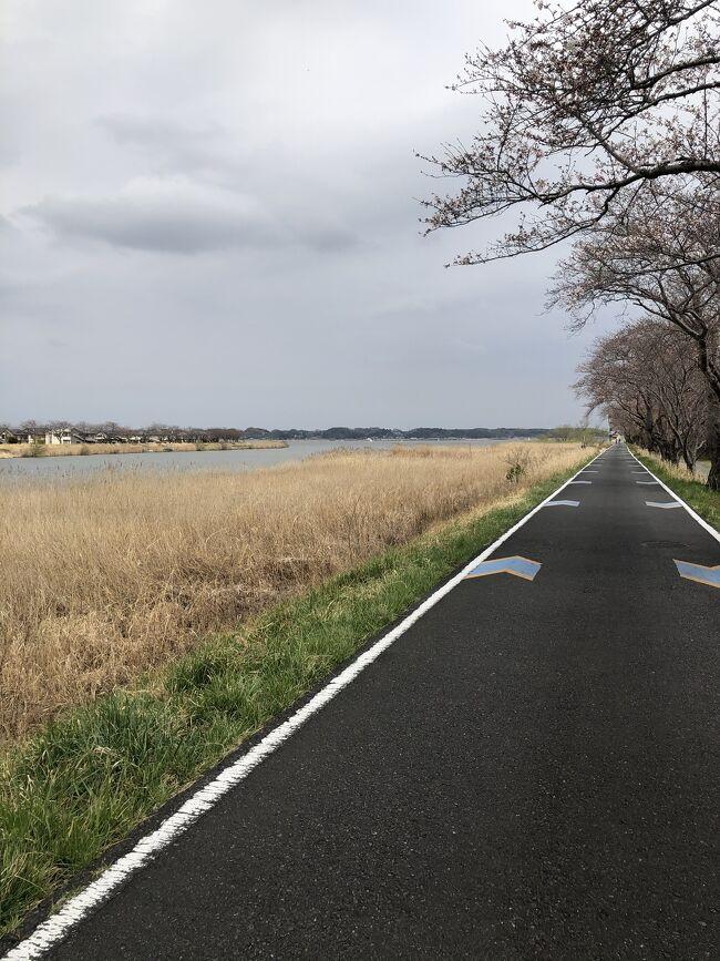 アトレで自転車レンタルして、霞ヶ浦湖畔サイクリング