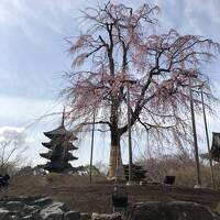 2021年 春の京都へ