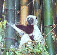 マダガスカルの旅 第8日目 アンタナナリヴ滞在
