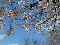 2021年 ソメイヨシノ日本最速開花宣言の裏話 広島 縮景園