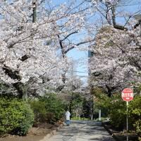 L MAR 2021  プチ花見・・・・・②中野区北部の桜