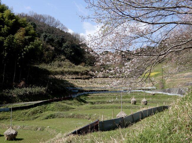 全国的に今年の桜は早いよ~の噂通り、ほんと早かったですね<br />そんな2021の桜、まずは飛鳥から始めます<br />遠くへは行けないので近場の奈良にて攻め歩き作戦(笑)<br /><br />なんかさ開花も早いけど、散るのも早いらしいんだってね<br />それは大変^^; この1週間が勝負かしら<br /><br />って事で《桜歩き》第一弾『奥飛鳥』編<br />はじまり♪はじまり<br /><br /><br />