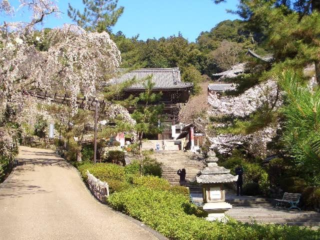 人混みを避け、奈良の桜の名所の穴場を狙いましょうと、長谷寺を選んだ。<br /><br />調べてみると、旅館「大和屋」に宿泊すると、長谷寺の「朝の勤行」に参加できる。<br /><br />朝の勤行に参加させていただいて、清清しい気持ちで、桜を愛で、旅館では、地元の名物料理をいただく。徒歩5分の所に天然温泉千人風呂があるとのことなので、こちらも利用しましょう。<br /><br />なお、同行者は家内です。コロナ禍で所属しているサークルは開店休業、アルバイトも辞めてしまったので、暇を持て余し、虎がネコのようになってしまっている。刺激が必要だろうと、近場旅行に誘った。