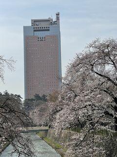 桜、桜今咲き誇る~