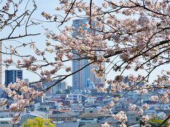 2021年桜開花状況♡真間山弘法寺