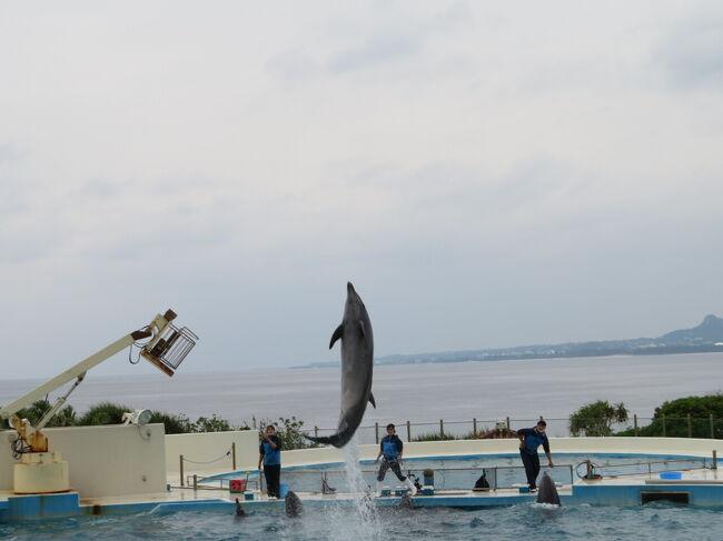 十数年前にカヌチャベイに宿泊した時に美ら海水族館に行きたかったのですが行かれず。<br />家族は興味無しだったんです。<br />それからずっと行きたいと思い続けて十数年。<br />今回念願かなって美ら海水族館に行ってきました。<br />今日からハレクラニ沖縄に2泊です。