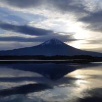 逆さ富士にリベンジの田貫湖&三嶋大社の桜