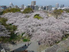桜満開の福岡城さくらまつり2021に行ってきました!!(*^-^*)
