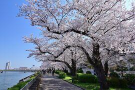 ぷらっと東京さんぽ《Scene.5》~隅田川を彩る墨堤の桜~