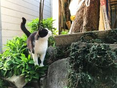 二つのあいのしま(相島と藍島)へ…ネコ時々観光の福岡旅【1】モフモフ三昧!相島編