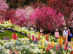 春爛漫! 里山ガーデンフェスタと川和町の菜の花畑