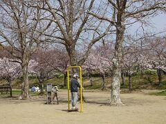 昆陽池公園からたんたん小径を通り、瑞ヶ池公園とスポーツセンターの花見をしました その5。