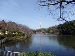 2021年3月三ツ池公園のさくらと小さな花