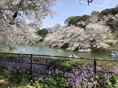 春風に桜の花びらが舞う満開の千鳥ヶ淵