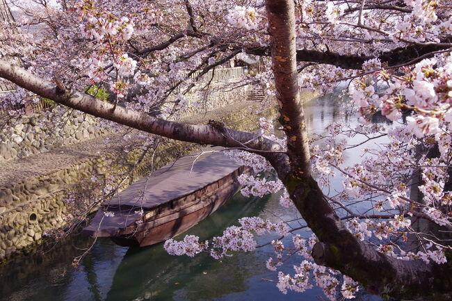ギリギリまで天気予報や桜の開花情報とにらめっこしながら決めた、お花見ドライブ旅行 in 岐阜 & 愛知