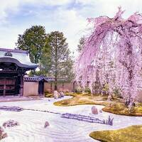 *春爛漫の京都へ行こう♪*~白川巽橋~高台寺~K36 Rooftop ~ザ ホテル青龍 京都清水宿泊の母娘旅~