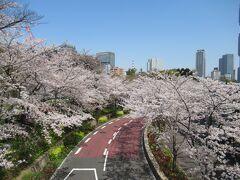 2021年東京・お花見①