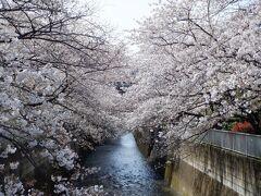 L MAR 2021  プチ花見・・・・・④東中野付近の桜