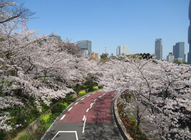 東京の街を、密に気をつけて、散策しながらお花見①