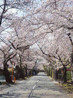 2021.3 伊東温泉で1泊、城ヶ崎海岸・伊豆高原で桜を見て来た2日間(後編・城ヶ崎海岸・伊豆高原)
