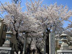 2021年03月お花見散歩:清水池公園、円融寺、碑文谷八幡宮、碑文谷公園他