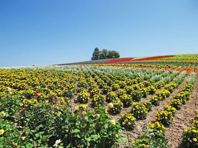 本旅行記は「花の富良野・美瑛 III 上富良野 フラワーランドかみふらの」(https://4travel.jp/travelogue/11675819)の続きです。今回ご報告のかんのファームは、農家の菅野秀一氏が私有していた西向き傾斜した農園に1982年頃から農業用として花を植え始めましたが、幹線道路である国道237号(通称富良野国道、花人街道)沿いという事もあって観光客が徐々に増え、1990年にはこの名前を冠した花園となりました。農園全体の面積は約8 haで花園部分の面積は約2.5 ha、開園期間6月中旬~10月中旬(年によってかわります。)です。農園の国道沿いには売店「きんこんかんの」があって花の種、ラベンダーグッズやクラフト作品を販売しており、農園で穫れたじゃがいもやとうもろこしなどの味覚を楽しむこともできます。またこれらの野菜は売店隣の直売所で購入できます。<br />開園時間は午前9時~日没まで(天候によって変わります。)です。<br />入園料、駐車場(約50台)は無料です。<br />