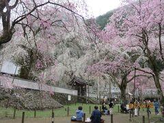 2021 秩父の桜の名所とその周辺を回る旅