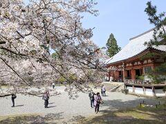 醍醐寺のさくら