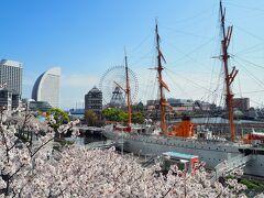 横浜さんぽ19☆お花見2021(マスクお花見~♪)