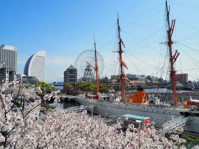 横浜市内で桜を中心にマスクお花見してきました。<br />3/27、29、30と各所に見に行きました♪