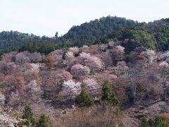 2年ぶり13回目の奈良旅は、1泊2日で桜めぐり♪① 吉野 編