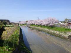 令和3年3月31日 明日香風は今日もやさしく吹いています