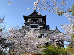 春爛漫☆桜満開の国宝 犬山城