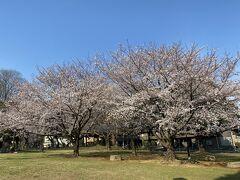 2021年3月 城北公園&石神井川で花見