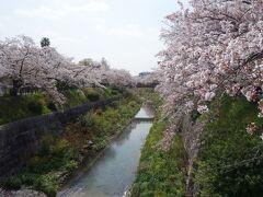 山崎川緑地