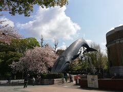 上野公園で桜