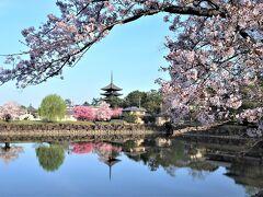 """~桜の花でいっぱいの奈良へ~ 後編 <奈良ホテルから """"ならまち"""" 散策と 春日大社>"""