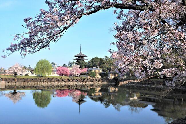 """4/1(木)<br /><br />私にとって旅行先では恒例になっている朝の散歩で、桜と五重塔が池に映り込む美しい景色を堪能しました。奈良ホテルに戻り、美味しい茶粥の朝食を頂いた後  """"ならまち""""  を散策して、町屋や「からくりおもちゃ館」を見学したり買い物をしたりして楽しみました。<br /><br />その後いったんホテルに戻り、おすすめのアップルパイやサンドイッチをティーラウンジで頂き、興福寺と春日大社に向かいました。<br />春の奈良公園は桜がいっぱい咲いていて、花びらが緑の草原の上に落ちる様子は素敵な映画のワンシーンを見ているようでした。鹿たちがのんびりと草を食む姿を見ながらの移動は、「奈良に来た~」っていう感じがしました♪<br /><br />春はあっという間に過ぎ初夏の訪れを感じるこの頃ですが、感染対策をしながら2年目のコロナ禍で季節の花を楽しみたいです。"""