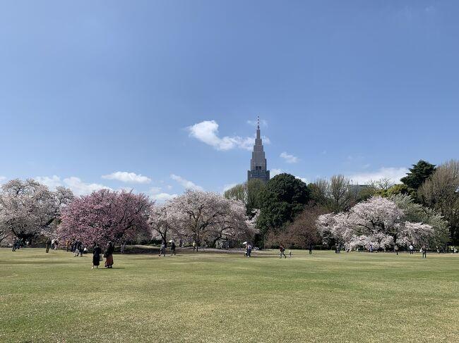 コロナ感染が再拡大とまだまだ心配な状況ですが、密を避けつつ、ちょこっと息抜きしてきました。<br />とっても久々なレストランでのお食事とホテルステイ、桜満開の新宿御苑でお花見を楽しみました。<br />