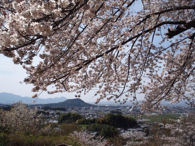 2週間前に九州過酷旅から帰って来たばかりですが、桜を見に奈良へ。<br />桜の開花に合わせて行先を決めた結果、吉野と飛鳥と奈良公園と大神神社に行ってきました。<br />もっともっと行きたい場所はあったのだけど、体力的にも時間的にも足りなくて悔しい~<br />でも1番の目的だった、桜+奈良ならではの風景を思う存分楽しんで来ました!<br />いつもより ちょっぴりゆる~い旅行記ですが、お付き合いくださいませ。<br /><br />≪往路≫ <br />3/26(金)東京鍛冶橋駐車場 23:00 → 京都八条口 5:30 深夜バス オリオンバスのびのびシート(4800円)<br />≪復路≫ <br />3/28(日) 京都 15:30 → 東京 17:45 のぞみ232号(スマートEX早特21 11000円)<br /><br />≪宿泊先≫<br />SLOW HOUSE NARA【スペシャルティーコーヒー付きカフェ朝食プラン】1泊税込6025円ところ楽天ポイント利用して3025円(楽天トラベルより予約)