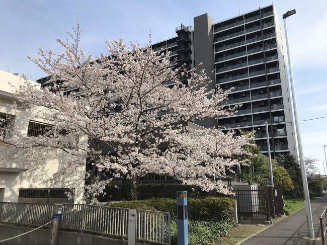 コロナ禍2年目の開花時期です。<br />近所の桜を撮影しました。