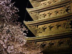 京都桜めぐり① 東寺のライトアップと御宿野乃