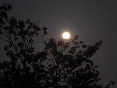 福岡の休日、食事に花見そして最後はワームムーンの月見しました(^o^)