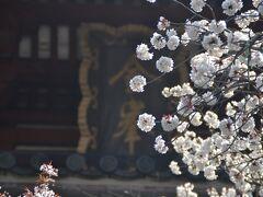 2021年4月 奈良吉野山へ桜を見に行きました