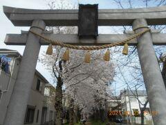 戸塚宿の桜を巡る