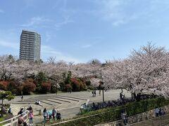 2021年3月 飛鳥山公園で昼の桜鑑賞