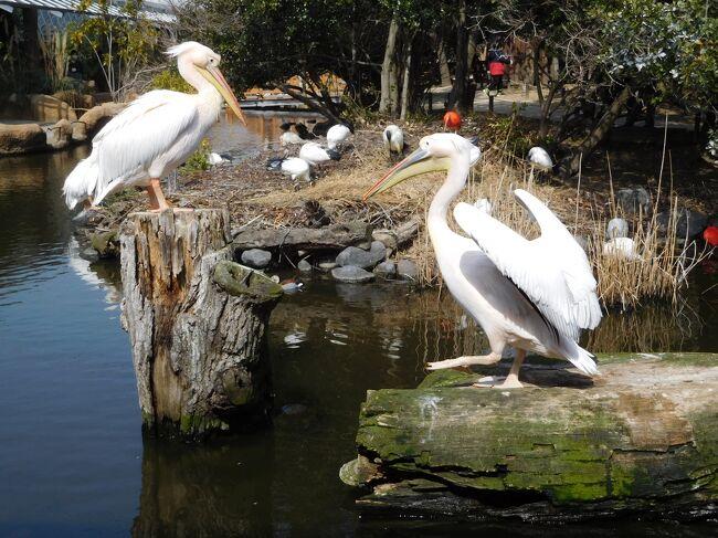 神戸に行ったら必ず立ち寄りたい場所『神戸どうぶつ王国』。<br />以前、花鳥園グループだった時に初めて行き、すっかり花鳥園の虜になってしまいました。<br />リニューアルして、鳥だけでなく、様々な種類の動物達を間近で見たり、触れ合ったり、体験したり...。すごく楽しめる場所です。<br />神戸旅行の最終日、神戸空港からのスカイマーク便を午後少し遅めの便にして、「神戸どうぶつ王国」で楽しんでから羽田に戻りました。