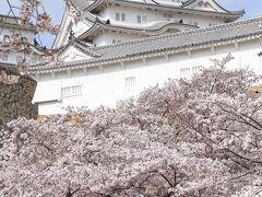 桜に誘われて千姫の小径から三の丸広場まで ー 姫路