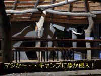 噂の「アフリカ・オーバーランドツアー」に参加してみたさ…その10 ゾウ嵐キタ~!
