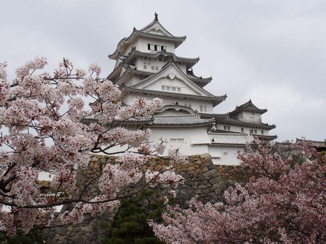 ご近所散歩姫路再発見 桜咲く風景